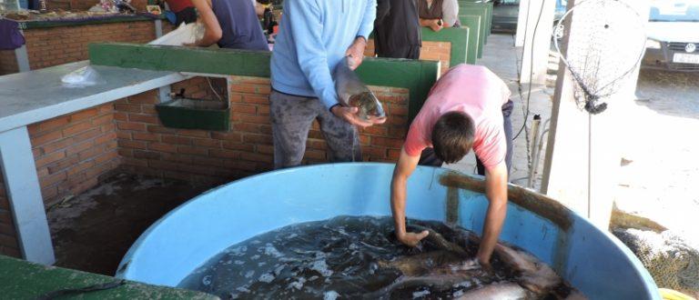 Feira do Peixe Vivo começa nesta terça