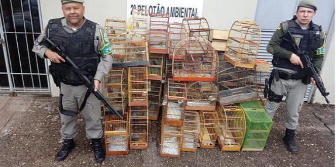 BM apreende 63 pássaros silvestres em Rio Pardo