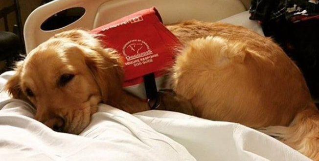 Sancionada lei que permite entrada de animais em hospitais do Estado
