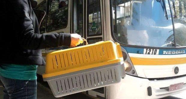 Passageiros de ônibus intermunicipais poderão viajar com pets sem pagar tarifa extra