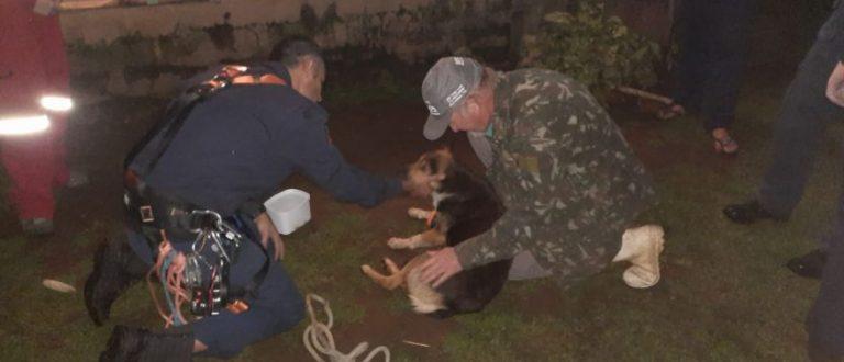 Bombeiros resgatam cadela que ficou presa em penhasco por sete dias