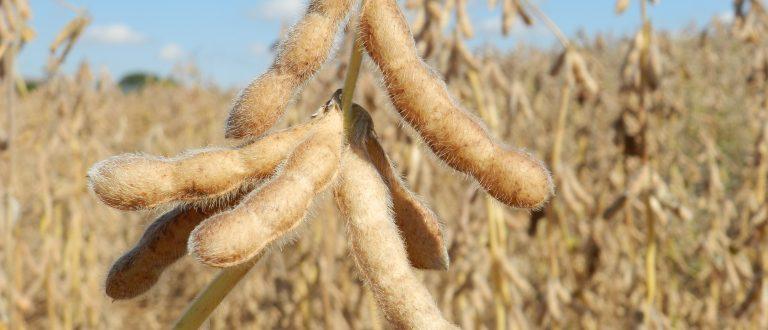 Depois do arroz, governo estuda zerar tarifa de importação da soja