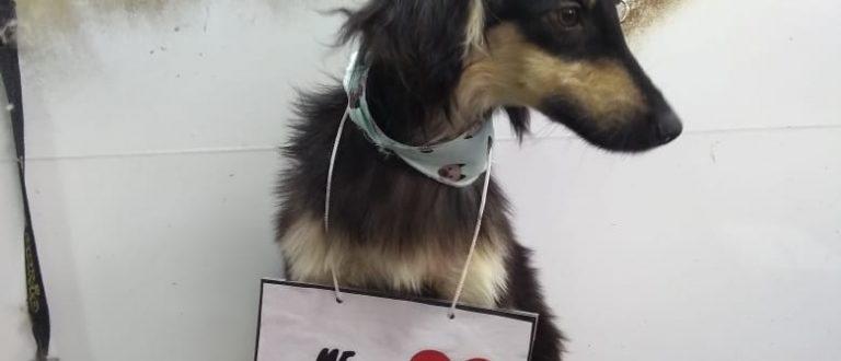 Cães estão disponíveis para adoção no DVS de Cachoeira