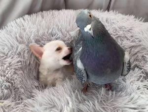 Amizade de cãozinho e pomba