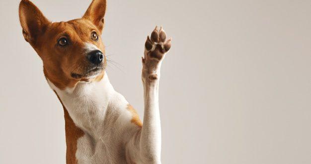 Cachorro de portão