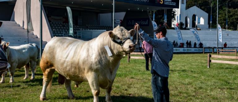 Expointer 2021 recebe 2.820 inscrições de animais de argola