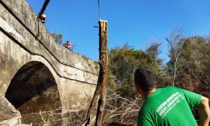Força-tarefa começa a remover galhos na Ponte de Pedra