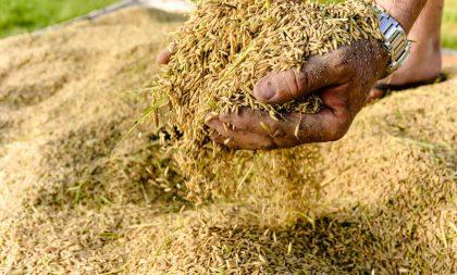 Estado isenta ICMS em operações de farelo de arroz para ração animal