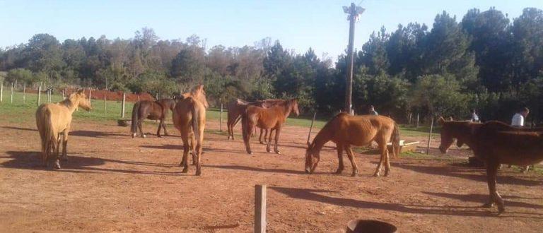 Cempra já tem 30 cavalos recolhidos das ruas