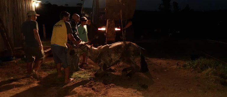 Cachoeira do Sul: projeto combate exploração de uso de animais em carroças