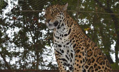 Zoológico abre nesta segunda, feriado de Dia do Gaúcho