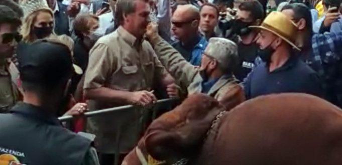 Bolsonaro prestigia touro do cachoeirense Cacaio Lima na Expointer