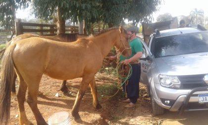 Segue a chipagem e resenha de cavalos