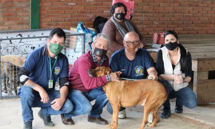 15 cães foram adotados na Feira de Adoção