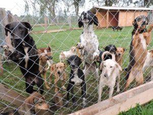Entra em vigor lei que proíbe sacrifício de animais por zoonoses