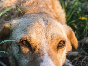 Paraíso do Sul registra surto de cinomose canina