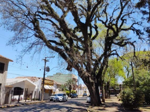 Retirada de árvore causará interrupção do trânsito no sábado