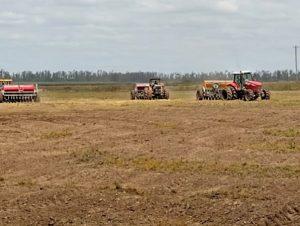 Semeadura de arroz no RS alcança 36%