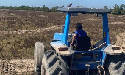 Cachoeira já semeou 56% da área de arroz da safra 2021/2022